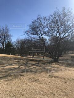 フィールドのツリーの写真・画像素材[933334]
