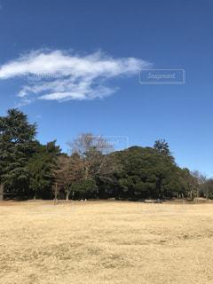 背景の木とフィールドの写真・画像素材[933335]