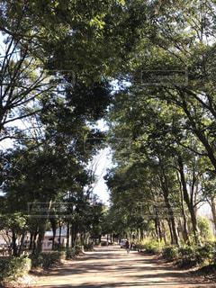 森の大きな木 - No.933346