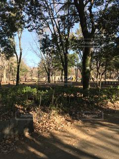 公園の木の写真・画像素材[933347]