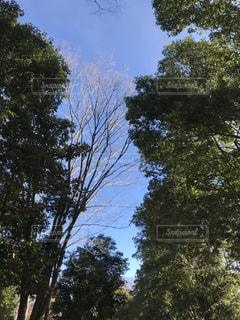 近くの木のアップの写真・画像素材[933348]