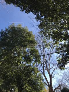 近くの木のアップの写真・画像素材[933358]