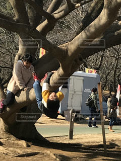木に座っている人々 のグループの写真・画像素材[977234]