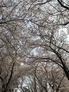 近くの木のアップの写真・画像素材[1144548]