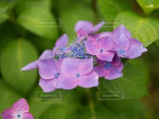 花の写真・画像素材[596804]