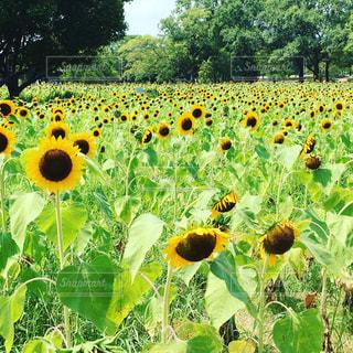 夏の写真・画像素材[596951]