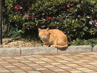 猫の写真・画像素材[598212]