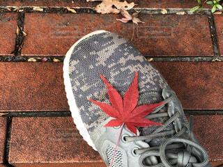靴の上の紅葉の写真・画像素材[3963507]
