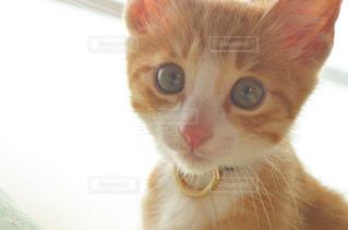 子猫 茶々丸 愛猫 ペット ねこ こねこの写真・画像素材[598369]