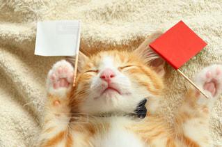 子猫 茶々丸 愛猫 ペット ねこ こねこの写真・画像素材[598396]