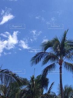 風景の写真・画像素材[598713]