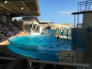 イルカの写真・画像素材[620708]