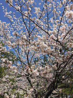 春の写真・画像素材[598875]
