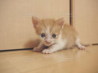 猫の写真・画像素材[598950]