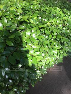 緑の写真・画像素材[599168]