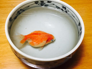 どんぶりの中の金魚の写真・画像素材[781405]