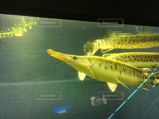 水面下を泳ぐ魚たちの写真・画像素材[1384591]
