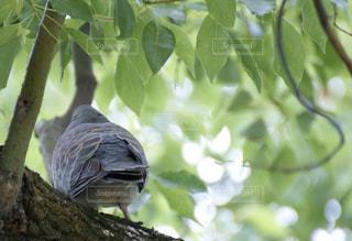 自然の写真・画像素材[599970]