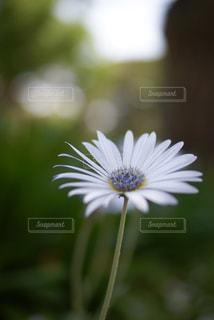 自然の写真・画像素材[599972]