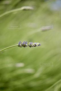 自然の写真・画像素材[599973]