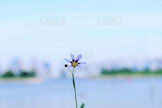 海沿いの花の写真・画像素材[933569]