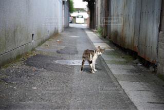 路地裏の子猫の写真・画像素材[933579]
