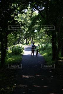 森の中を冒険の写真・画像素材[933589]