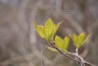 近くの花のアップの写真・画像素材[934614]