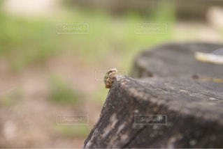 森の中のカエルの写真・画像素材[934615]