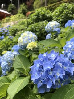 花の写真・画像素材[600096]