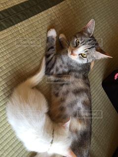 子猫の写真・画像素材[608302]