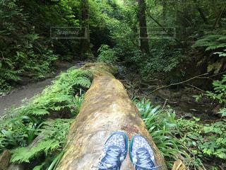 木の上でちょっとひと休み。の写真・画像素材[783565]