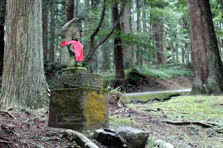 平泉寺白山神社 参道の写真・画像素材[968014]