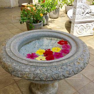 ハイビスカス  あざやか  かわいい 南国  トロピカル 花の写真・画像素材[600961]