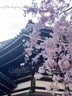 春の写真・画像素材[601044]