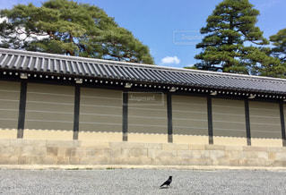 カラス  青空  散歩  鳥の写真・画像素材[601049]