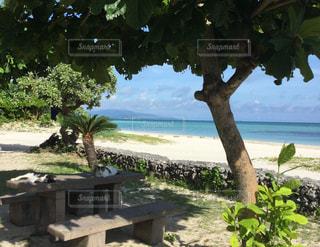 ビーチ  ネコ  昼寝  かわいい  海  青空  青い  沖縄  竹富島  ビーチの写真・画像素材[601050]