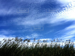 空の写真・画像素材[601592]