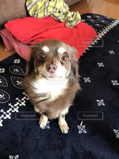 犬 - No.667870