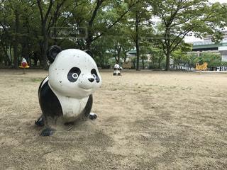 パンダの写真・画像素材[602950]