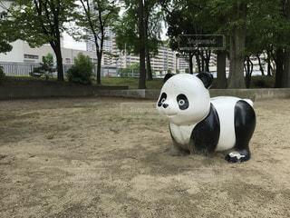 パンダの写真・画像素材[602951]