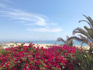 海の写真・画像素材[602187]