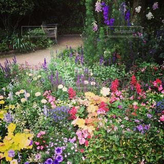花の写真・画像素材[622718]