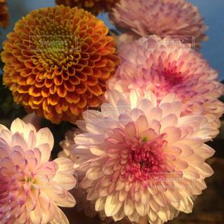 花のアップの写真・画像素材[886640]