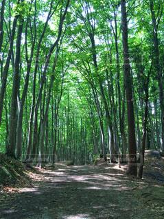 森の中の木の写真・画像素材[895841]