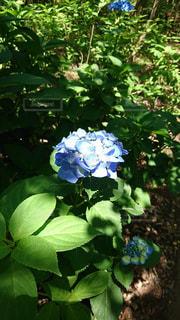 花の写真・画像素材[603230]