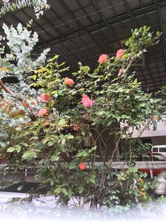 花の写真・画像素材[602528]