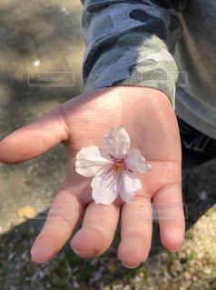 花の写真・画像素材[2037701]
