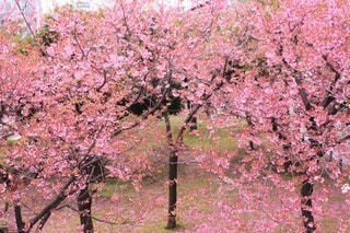 花の写真・画像素材[17526]