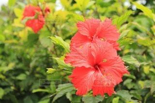 花の写真・画像素材[46584]